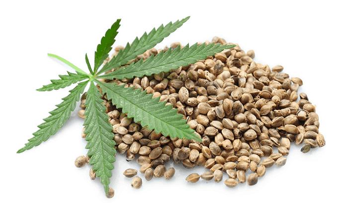 Different types of marijuana seeds